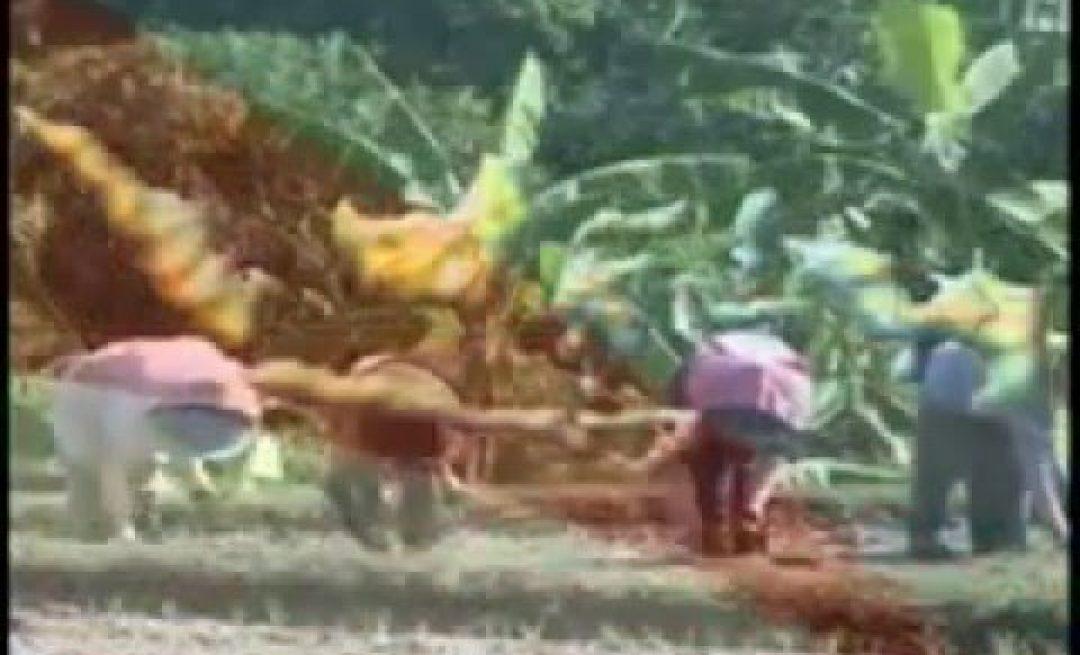Profil PPPPTK Pertanian cianjur