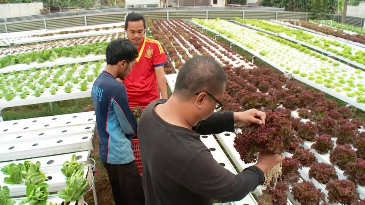 NET17 – Go Green Tehnik Hidroponik Pada Sayuran